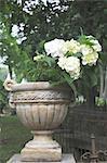 Amphora with Hydrangea