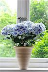 Bunch of flowers in windowsill