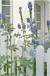 Blooming flowers in front garden