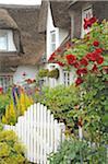 Blühenden Blumen vorne Garten