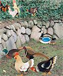 Figurines d'oiseaux dans le jardin