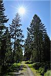 Parc National du Harz, Harz, Basse-Saxe, Allemagne