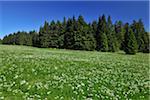 Parc National du Harz, Harz, Sonnenberg, Basse-Saxe, Allemagne