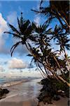 Plage et palmiers, Ahangama, Sri Lanka