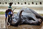 Bathing Elephant before Perahera Festival, Kandy, Sri Lanka
