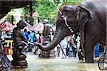 Éléphant dans une fontaine publique avant le Perahera Festival, Kandy, Sri Lanka