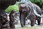 Éléphant à laver dans la fontaine publique avant Perahera Festival, Kandy, Sri Lanka