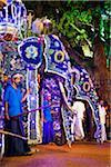 Elephants at Esala Perahera Festival, Kandy, Sri Lanka