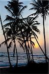 Silhouette of Palm Trees on Beach, Payagala South, Sri Lanka