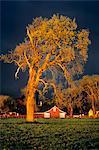 ANNÉES 1980 BIG TREE FARM BARN DRAMATIQUE LUMIÈRE STORMY SKY AUTOMNE