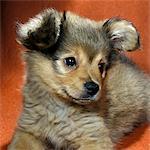 CUTE MUTT PUPPY DOG