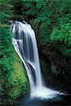 BUTTE CREEK FALLS SANTIAM STATE FOREST OREGON