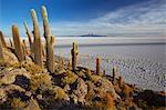 View over the Salar de Uyuni from Isla Incahuasi, Fish Island, Bolivia, South America