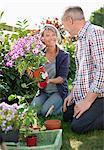 Smiling senior couple planting flowers in sunny garden
