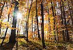 Soleil qui brille à travers les arbres dans la forêt