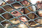 sad monkey in cage