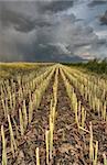 Stubble Field and Prarie Storm Canola Saskatchewan