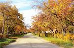 Autumn avenue in city park