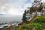 Scenic coastal view of rocky Atlantic shore with trees in Newfoundland, Canada
