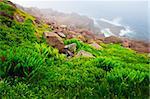 Scenic coastal view of foggy rocky Atlantic shore in Newfoundland, Canada