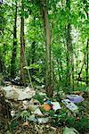 Garbage dumped in woods