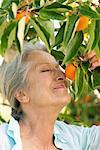 Haute femme Richard orange sur l'arbre