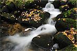 Forest Stream im Herbst