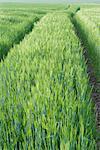 Chemins de roulement dans le domaine de l'herbe