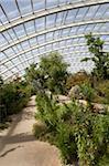 Domaine chilien et californienne du grand serre, National Botanic Garden of Wales, Llanarthne, Carmarthenshire, pays de Galles, Royaume-Uni, Europe