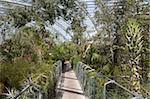 Promenade dans la zone de l'ouest australien du grand serre, National Botanic Garden of Wales, Llanarthne, Carmarthenshire, pays de Galles, Royaume-Uni, Europe