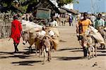 Donkey transport, Old Town, UNESCO World Heritage Site, Lamu island, Kenya, East Africa, Africa