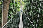 Canopy walk, Taman Negara National Park, Pahang, Malaysia, Southeast Asia, Asia