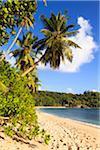 Küstenlinie von Anse Takamaka, Mahé, Seychellen