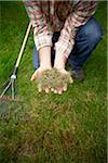 Gardener Raking Grass, Bradford, Ontario, Canada