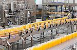Juice bottles moving along the conveyor belt