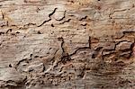 Gros plan du motif de grain de bois