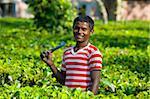 Travailleurs dans les plantations de thé Assam, nord-est de l'Inde, Inde, Asie