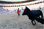 Amateur Stierkampf mit jungen Stieren, San Fermin Festival, Pamplona, Navarra (Navarra), Spanien, Europa