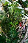 Royal Botanic Gardens Kew, Site du patrimoine mondial de l'UNESCO, Grand Londres, Angleterre, Royaume-Uni, Europe