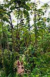Eden Project, Cornwall, England, Vereinigtes Königreich, Europa