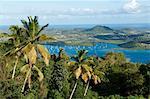 Vue sur les palmiers, Cul de Sac Du Marin, Martinique, département français d'outre-mer, îles sous-le-vent, Antilles, Caraïbes, Amérique centrale