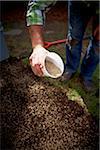 Gardener spreading Grass Seed, Toronto, Ontario, Canada
