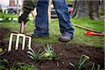 Gardener tilling Garden Soil with Pitchfork, Toronto, Ontario, Canada