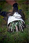 Gardener holding Transplanted Sedum, Toronto, Ontario, Canada