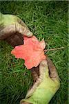 Gardener holding Maple Leaf, Toronto, Ontario, Canada