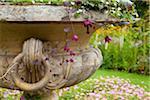 Rhodochiton Plant in Stone Flowerpot, Walled Garden, Wallington Hall, Northumberland, North East England, England