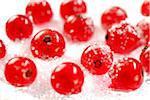 Redcurrants in caster sugar