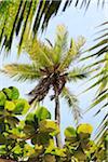 Palm Tree, Praia de Tabatinga, Paraiba, Brazil