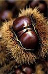 Chestnut en pod