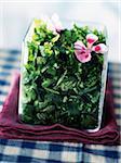 Salade fraîche de fines herbes